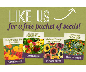 Holland bulb farms coupon code