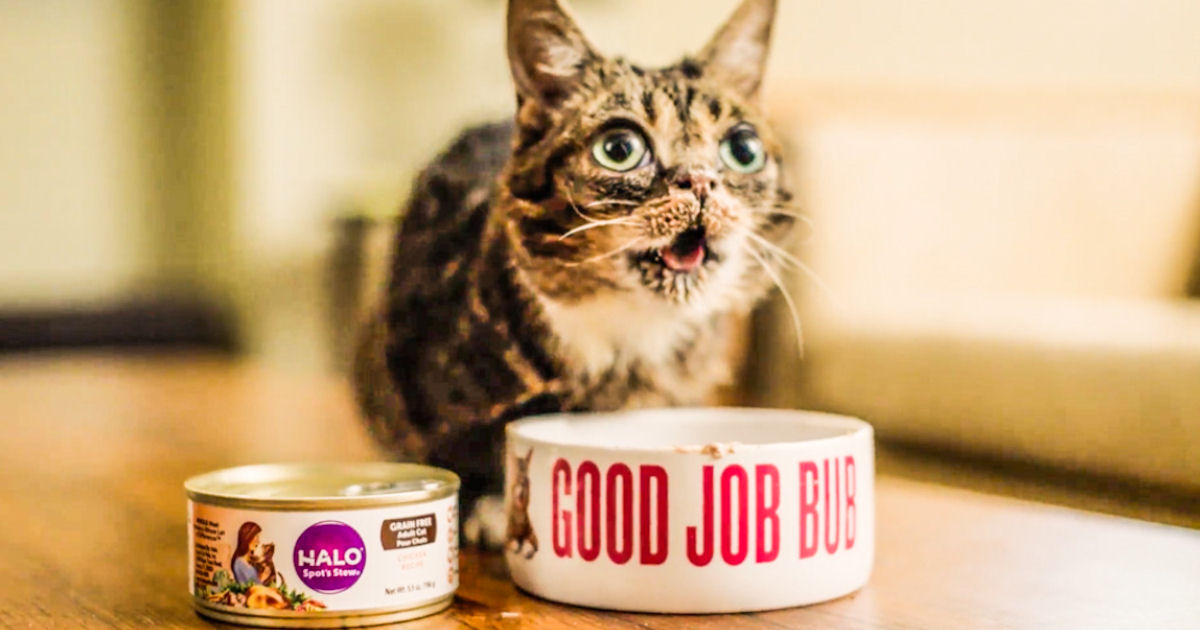 free can of halo cat food today free product samples