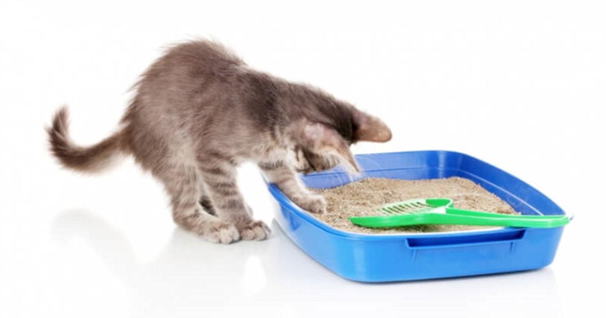 FREE ViviPet Cat Litter...