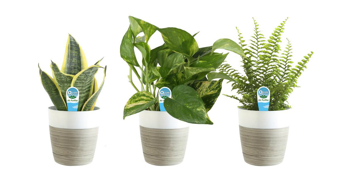 House Plants & Outdoor...