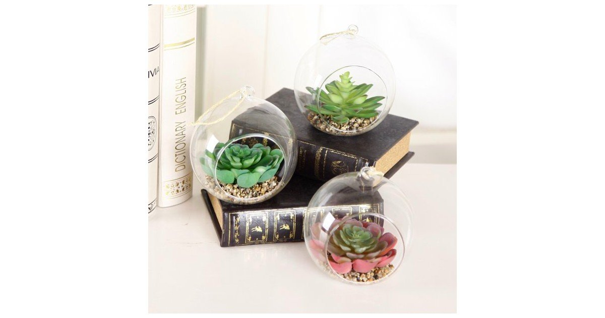 Table Top Glass Blub Succulents 3-Pack ONLY $8.29 (Reg. $25)