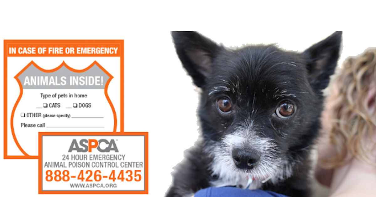 FREE ASPCA Pet Safety Magnet &...