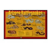 Arizona Rattlesnakes