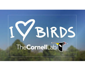 FREE I Love Birds Decal...
