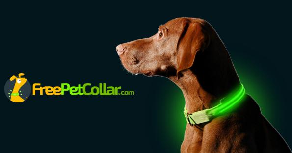 free l e d dog collar just pay shipping free stuff freebies