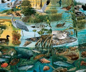 FREE Estuaries Scenes of Trans...